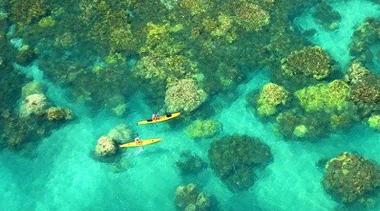 Olowalu Coral Bloom: Maui Snorkeling