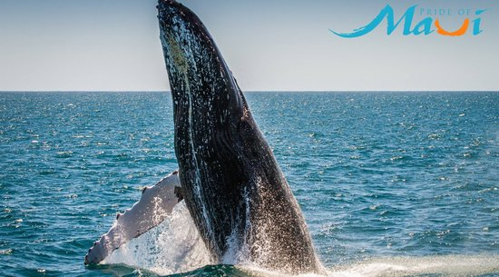 Pride of Maui: Whale Watching Tour