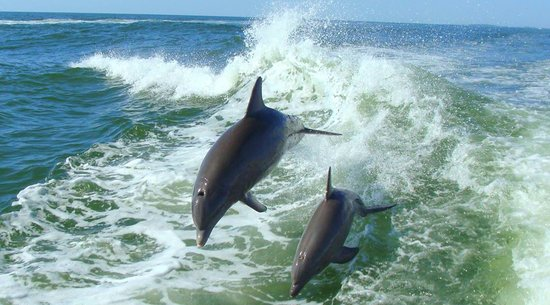 Myrtle Beach Dolphin Tours