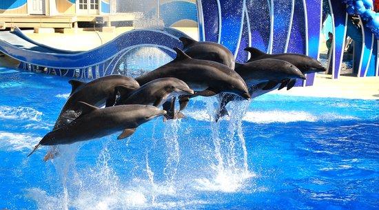 Dolphin Show at SeaWorld Orlando