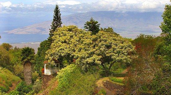 Kula Botanical Gardens: Maui Adventures