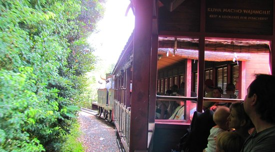 Wildlife Express Train: Animal Kingdom Attraction