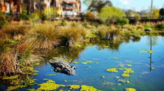 Alligator Adventure: Myrtle Beach Attractions