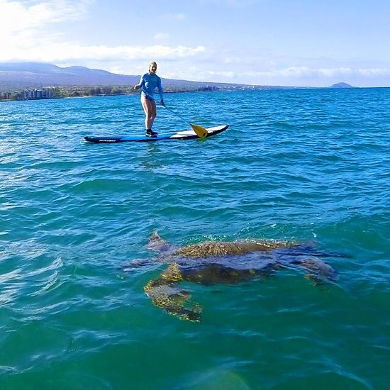 Stand Up Paddle on Maui: Turtle in the Ocean