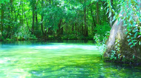 Orlando Family Vacation Guide: Ponce de Leon Springs: Orlando Activities