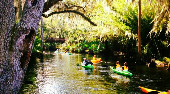 Kayaking in the Everglades: Orlando Activities