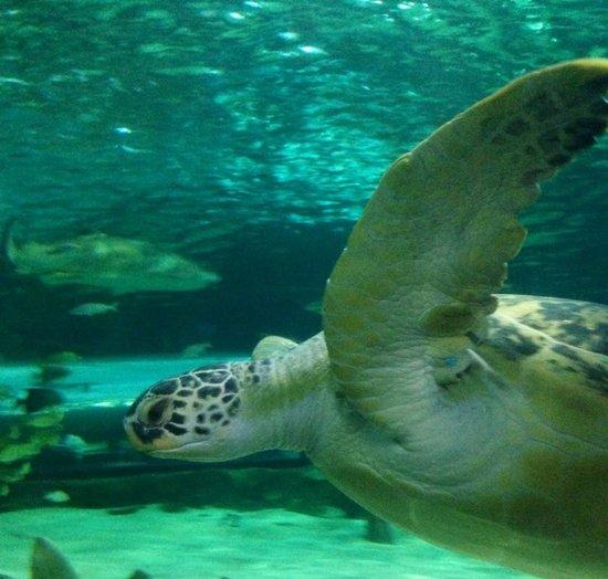Myrtle Beach Nature Tours