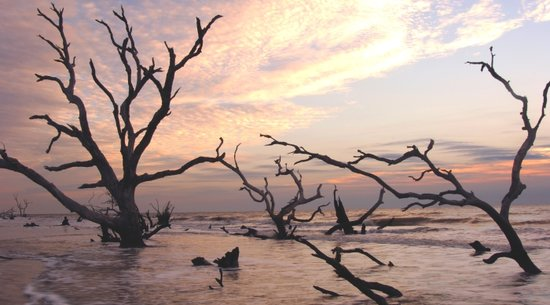 Bulls Island Ferry: Myrtle Beach Nature Tours