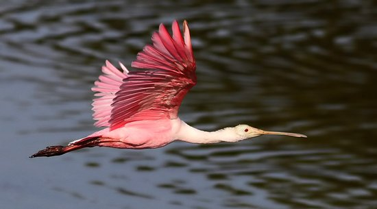 Huntington Beach State Park: Myrtle Beach Nature Tours