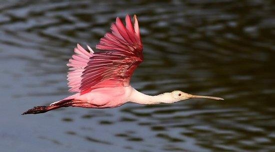 Huntington Beach State Park: Myrtle Beach Nature Tours