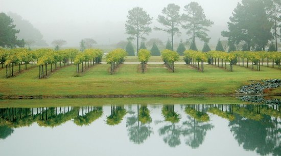 Duplin Winery: Myrtle Beach Wineries
