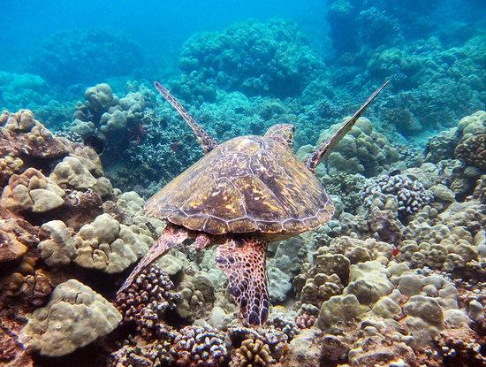 Coral Reefs Maui: Maui Excursions